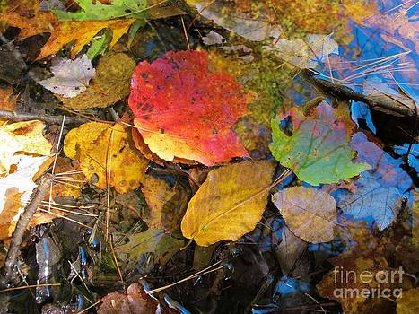 Leaves on Water by Linda Marcille