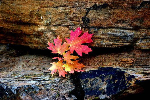 Leaves up on a Rock by Bill Zielinski