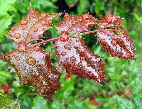 Leaves with Water Drops by Brian Chase