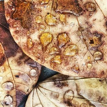 #leaves by Zarah Delrosario