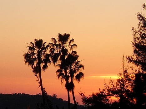 Ledbetter Sunset by Laura Young