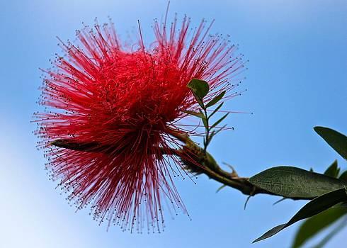 Venetia Featherstone-Witty - Lehua Blossom