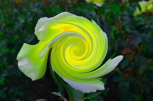Lemon and Lime Twirl by Eleni Michael