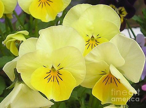 Lemon Beauties by Joanne Simpson
