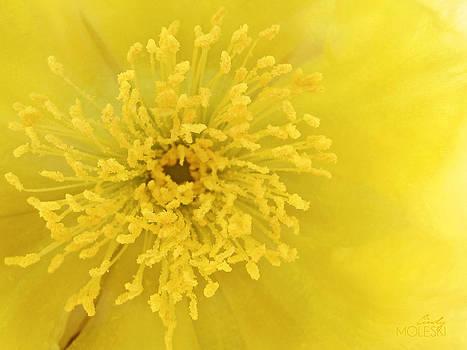 Lemon Yellow by Cindy Moleski