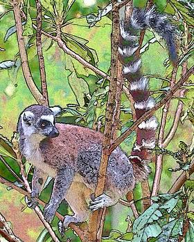 Lemur Sketch by Dan Dooley