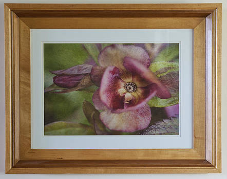 Lenten Rose by Rick Hartigan