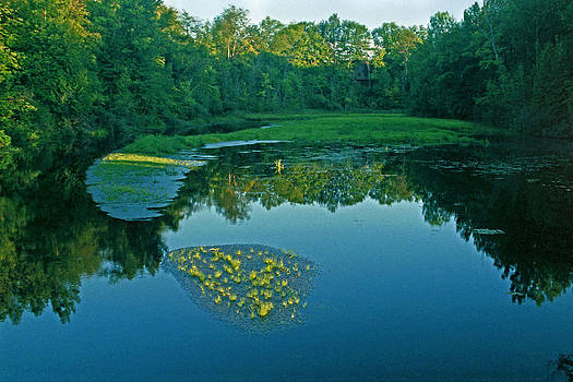 Leo Creek by James Rasmusson