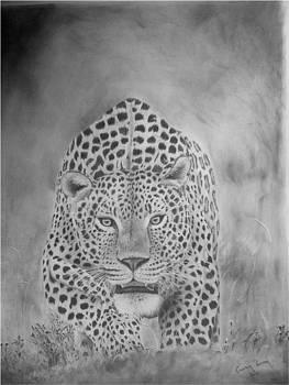 Leopard approach by Casper Venter