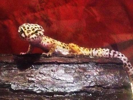 Leopard Gecko by Sierra Andrews