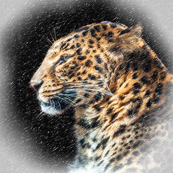 Leopard II by Tom Pickering of Photopicks Photography and Art