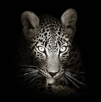 Leopard portrait in the dark by Johan Swanepoel