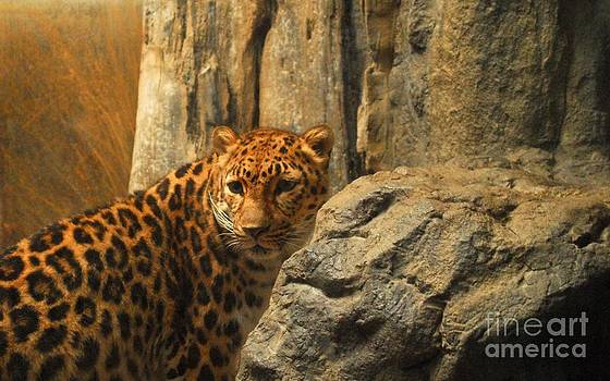 Anthony Wilkening - Leopard Print