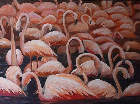 Les flamants des Emirats by Brigitte Roshay