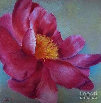Les Fleurs I by Sabina Haas