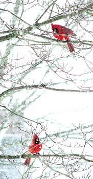 Angela Davies - Let It Snow