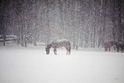 Let It Snow by Timothy J Berndt