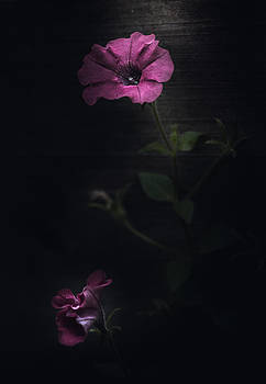 Let Me Bloom by Paul Barson