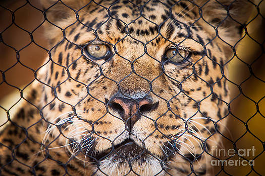 Let Me Out by John Wadleigh