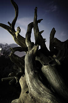 Let us branch out by Corey Schweikert