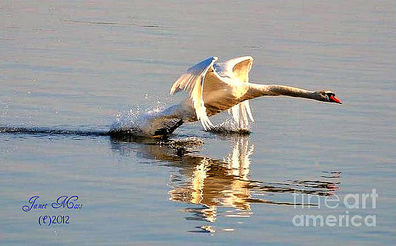 Lets Take Off by Janet Moss