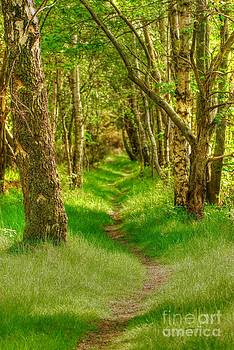 Lets walk along the sunlit woodland path by John Kelly