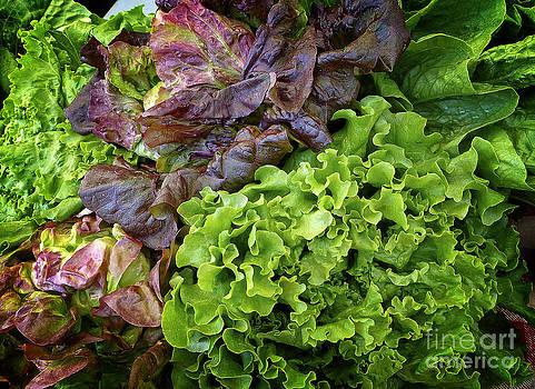 Dee Flouton - Lettuce Medley
