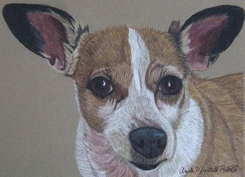 Levi - Chihuahua Commission by Anita Putman