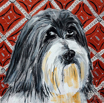 Lhasas Apso by Jay  Schmetz