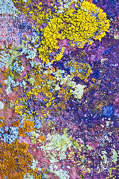 Mae Wertz - Lichen Abstract