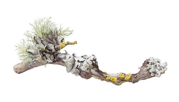 Lichen by Elizabeth R Smith