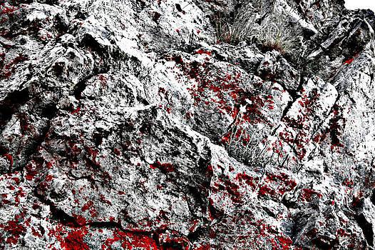 Lichens In Red by Dimitar Smilyanov