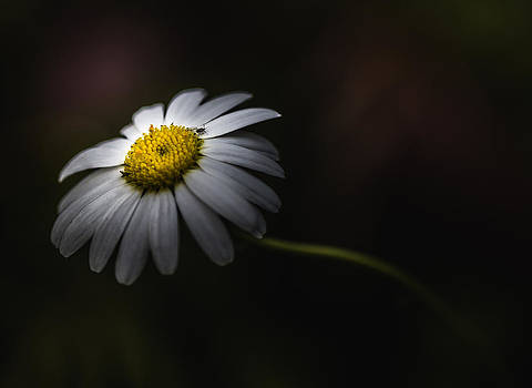 Life Is A Journey by Paul Barson