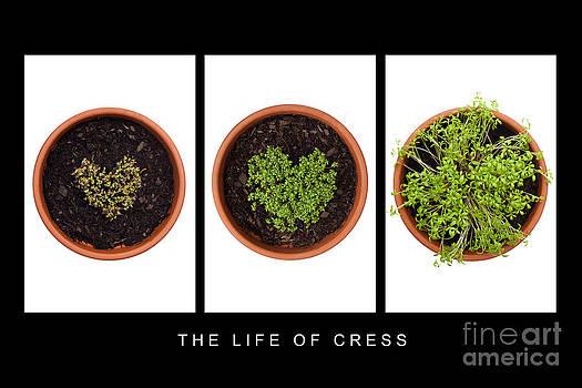 Anne Gilbert - Life of Cress