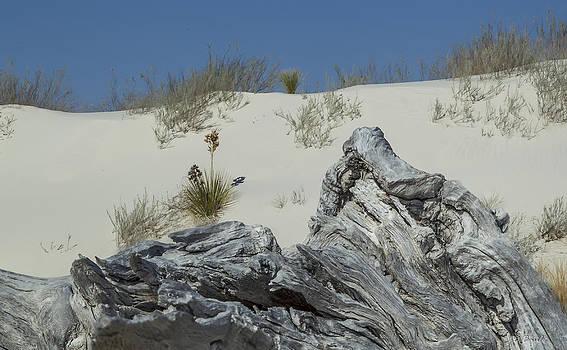 Life on the Dunes by Julie Basile