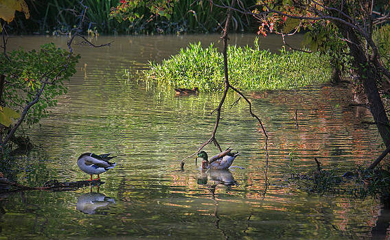 Life on the Lake by Joan Bertucci