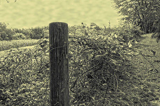 Life on the vine by Amy Lingle