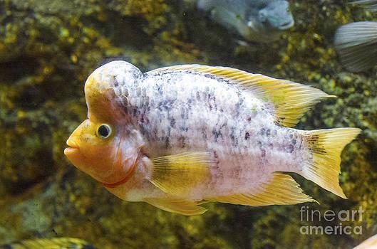 Pravine Chester - Life underwater