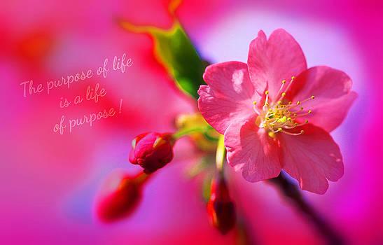 Life's purpose by Li   van Saathoff