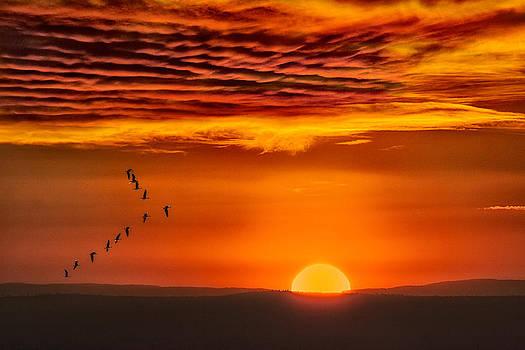 Lift Off at Sunrise by Bill Johnson