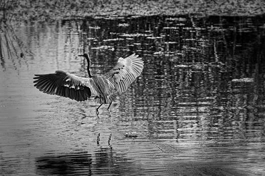 Liftoff by Chris Reed