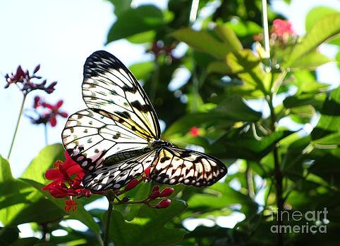 Light and Butterfly by Nora Martinez