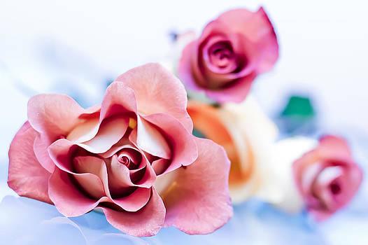 Elvira Pinkhas - Light and Roses
