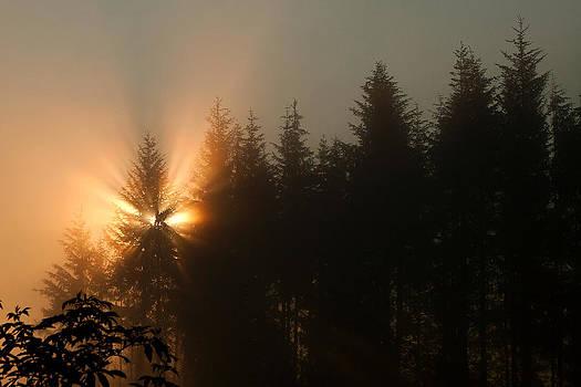 Light Burst by Lisa Chorny