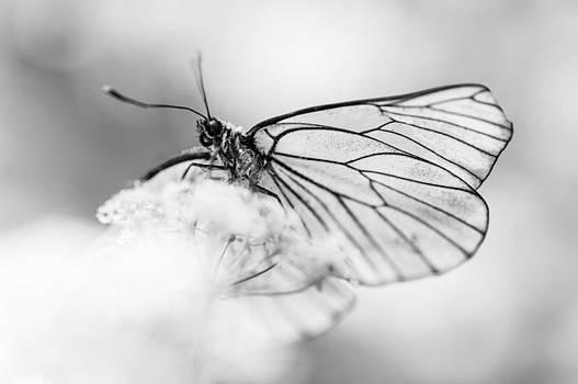 Jenny Rainbow - Light Flight. Black and White