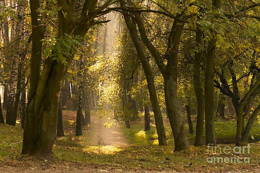 Light in Park by Monika Wisniewska
