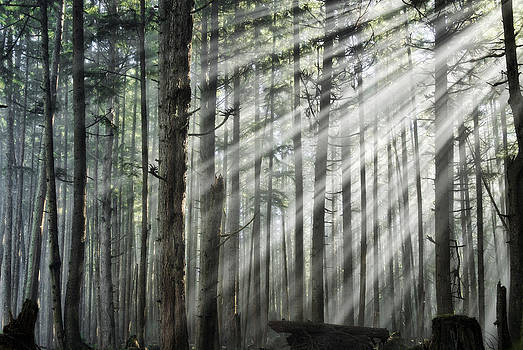 Light in the forest by Darryl Luscombe
