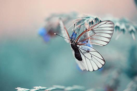 Jenny Rainbow - Light Life. Nature in Alien Skin
