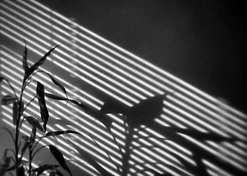 Light Music by Steven Huszar