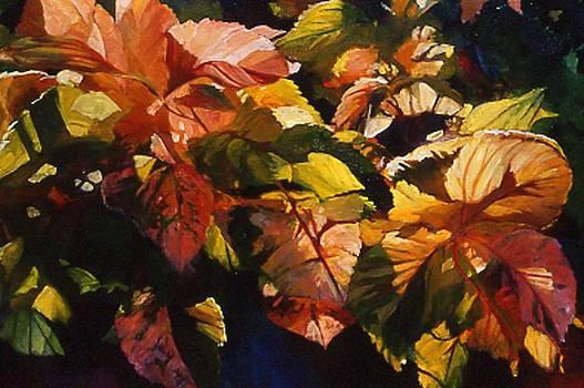 Light Patterns by Karen Vernon
